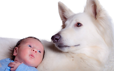 Lucie's List: Preparing your Dog for Baby's Arrival