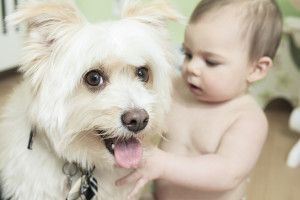 the best dogs for kids