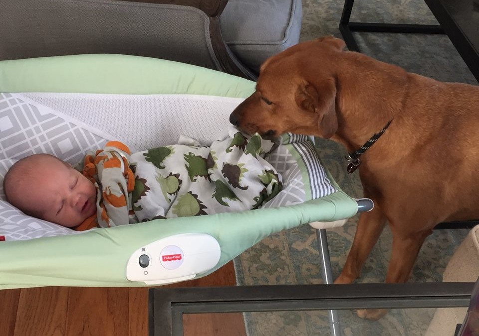 3 Warning Signs Predicting Trouble Between Your Dog And Baby