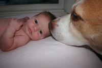 preparing-dog-babys-arrival
