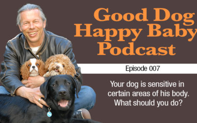 007: Your dog is sensitive to touch. What should you do?