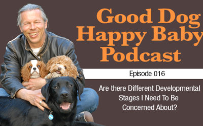 0016: Are there Different Developmental Stages I Need To Be Concerned About?