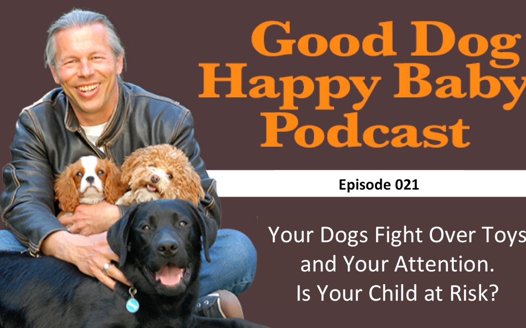 021: I Have Two Dogs Who Fight Over Toys and My Attention. Is this Going to Be a Problem?