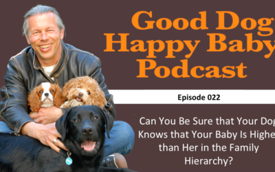 022: Can You Be Sure That Your Dog Knows Your Baby Is Higher in the Family Hierarchy?