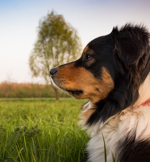 The First Command You Should Teach Your Dog To Build A Lasting Bond