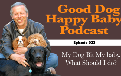023: Your Dog Bites Baby. What Should You Do?