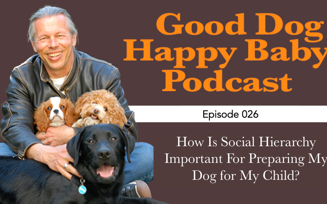 Is Canine Social Hierarchy Important When Preparing My Dog for My Child?